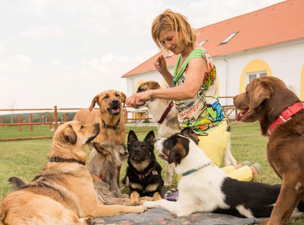 Frau spielt mit Hunden