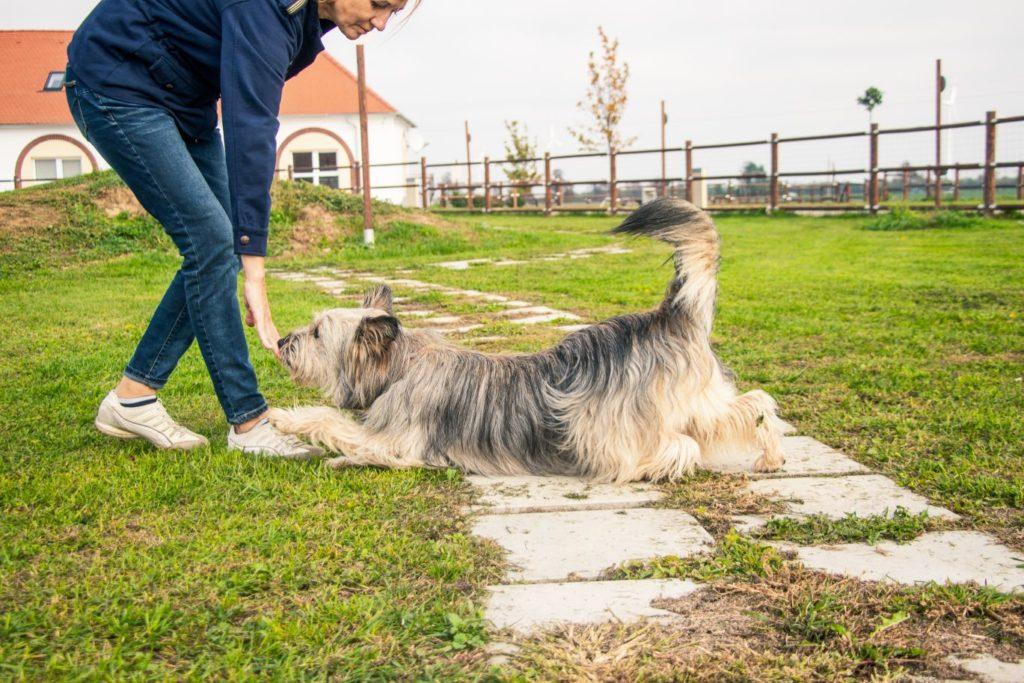 Hund spielt am Parcour