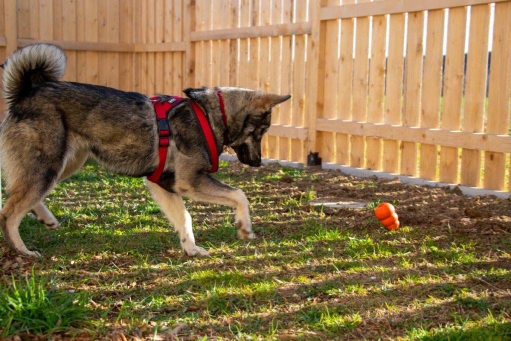 Hund beim Spielen 2
