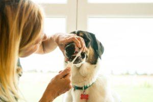 Zähneputzen beim Hund