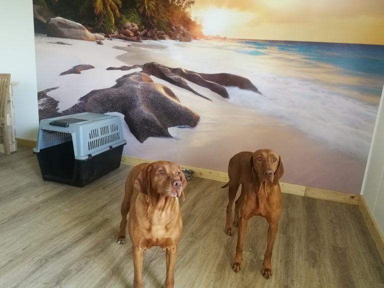 Kundenzitat-Hundefoto-AndreDeWaele