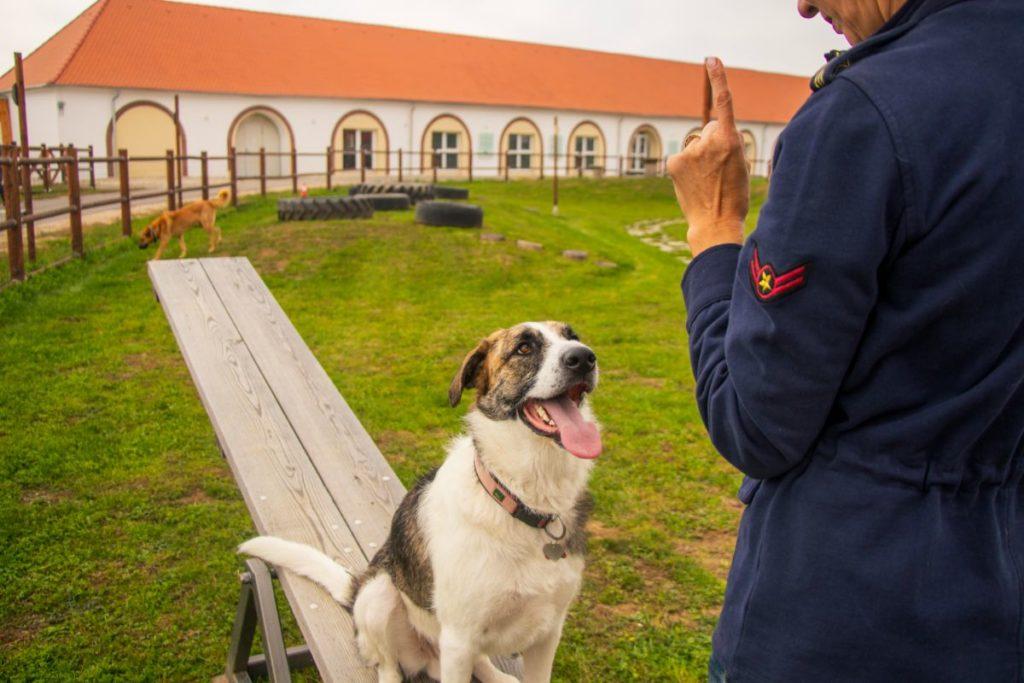 Hund beim Training 2