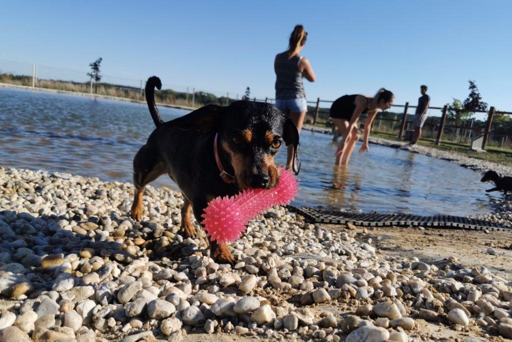 Hund im Hundeschwimmteich