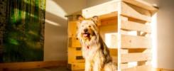 Hund unter Tisch im Hundezimmer