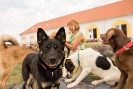 Hund mit aufgestellten Ohren